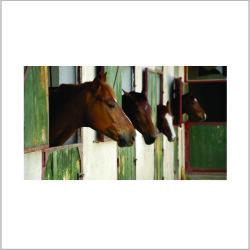 Tradeline - Web pics 500 x 500 - HorseStable Cam